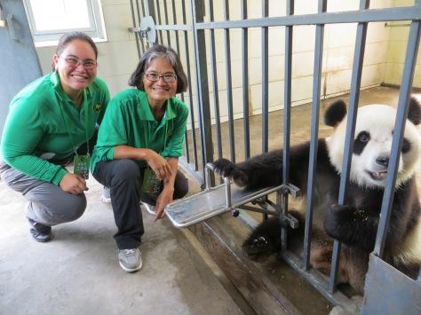 pandas BEST with Wu Wen 2016-07-02 058