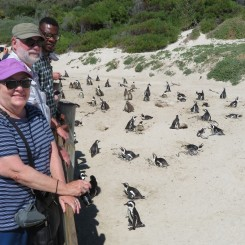 Boulders Beach penguins Tewks SA 2019 IMG_1970