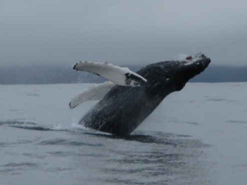 Husavik whale tour Iceland