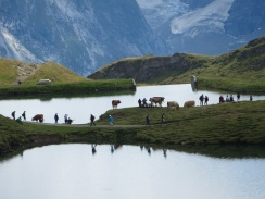 Grindelwald-First at Bachalpsee, Switzerland